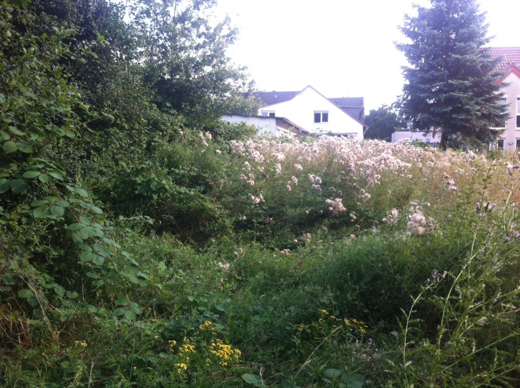 Bewuchs_Grundstück_August2013